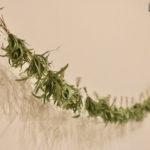 [Beauté au naturel] Ghislain Léger marie coiffure et bien-être, pour notre plus grand bonheur !