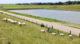 Champs de moutons à Texel