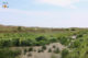 Végétation dans les dunes de Den Hoorn sur l'île de Texel