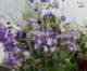 Ginger Flower, fleurs écoresponsables sur Liège